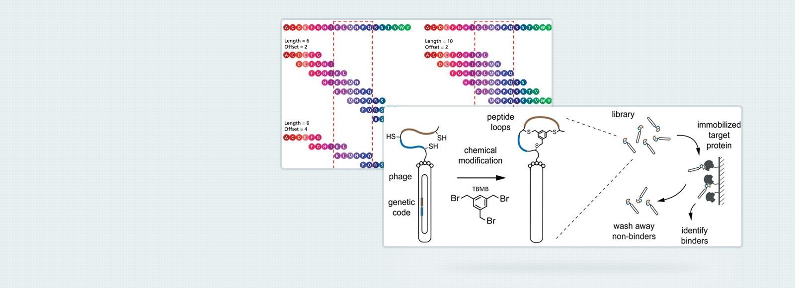 peptides-blog-banner3