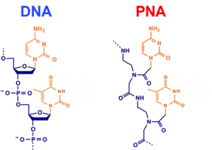 Peptide-Nucleic-Acid-Synthesis-Service-01