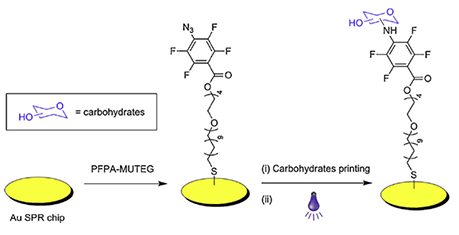 Fabrication-of-carbohydrate-conjugated-SPRi-sensors.png