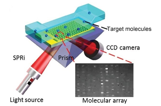 Surface plasmon resonance imaging (SPRi) service