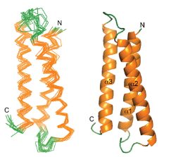 Peptide-C-Terminal-Modification.png
