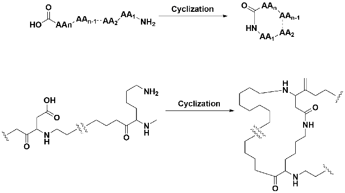 Side-chain-cyclization.png