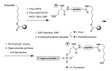 Total-stepwise-synthesis-of-oligonucleotide-peptide-conjugates-on-a-homoserine-functionalized-support.png