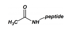 Peptide N-Terminal Modification